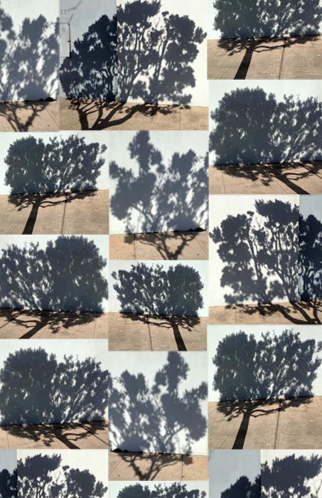 Trees | Katja.jpg