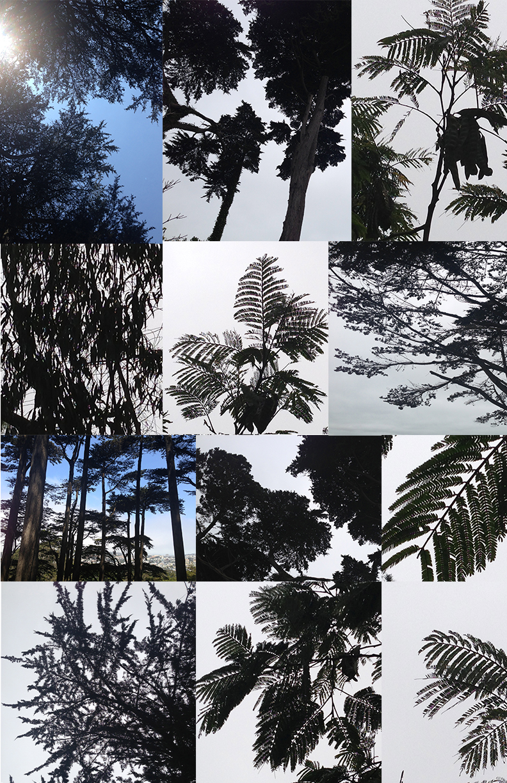 tree silhouettes.jpg