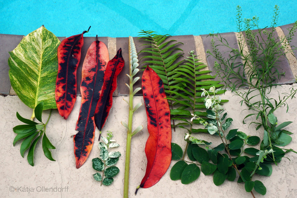 Florida leaves | Katja