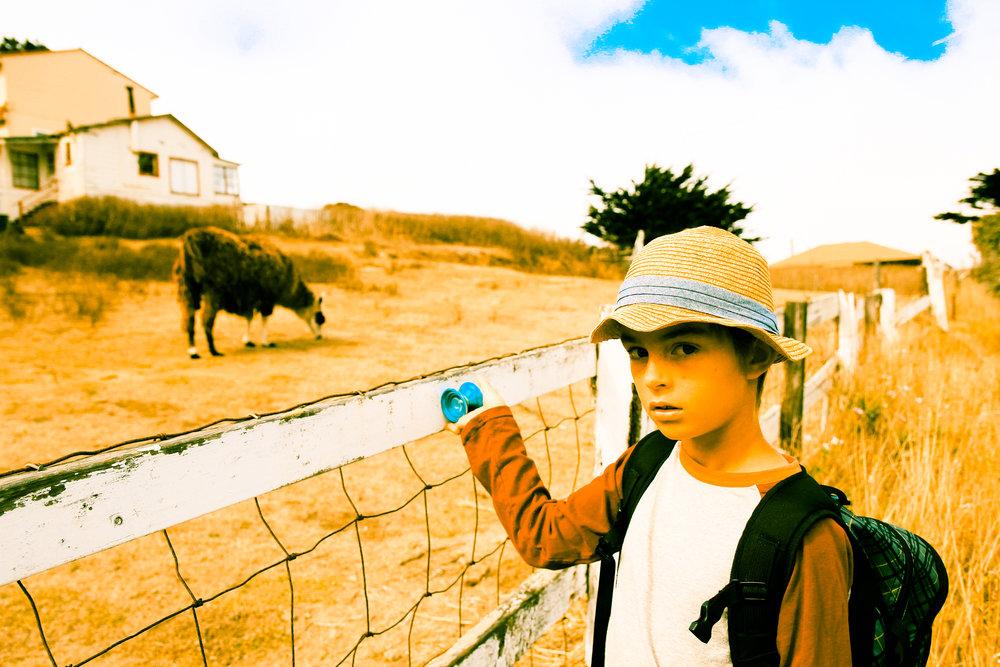 Pacifica Llama & Yoyo ©2017 Lisa Berman
