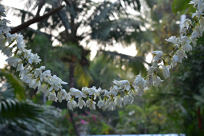 flowergarland.jpg
