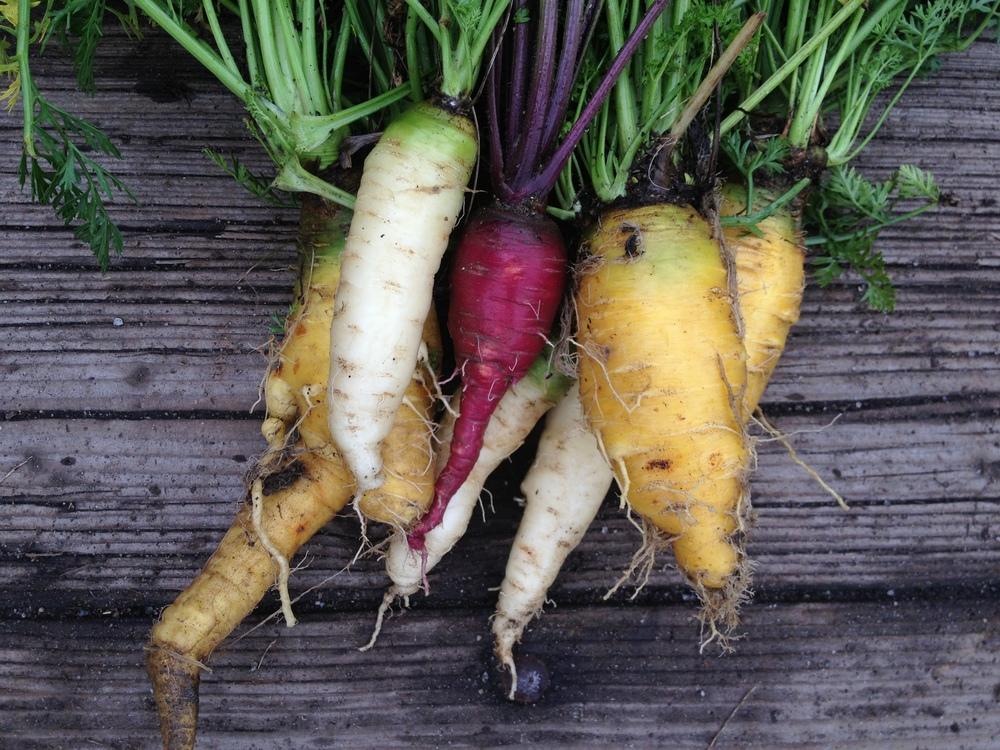 Carrot_Mix.JPG