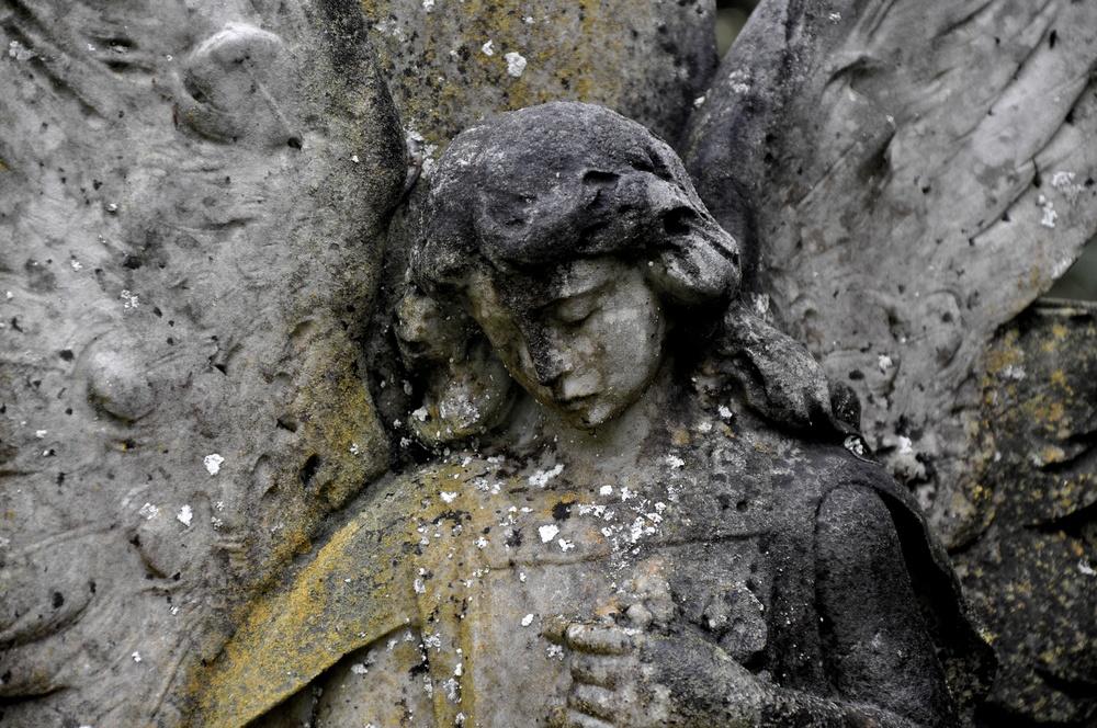 Spotted Angel.jpg
