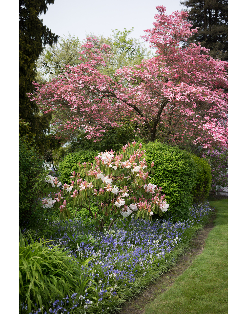 Flower Tree 2.jpg