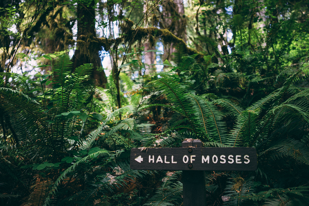 The beginning of the Hall of Mosses Trail in Hoh Rainforest