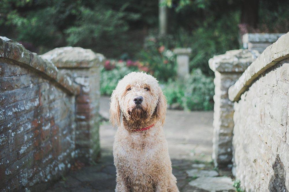 dog posing for photo in waddington