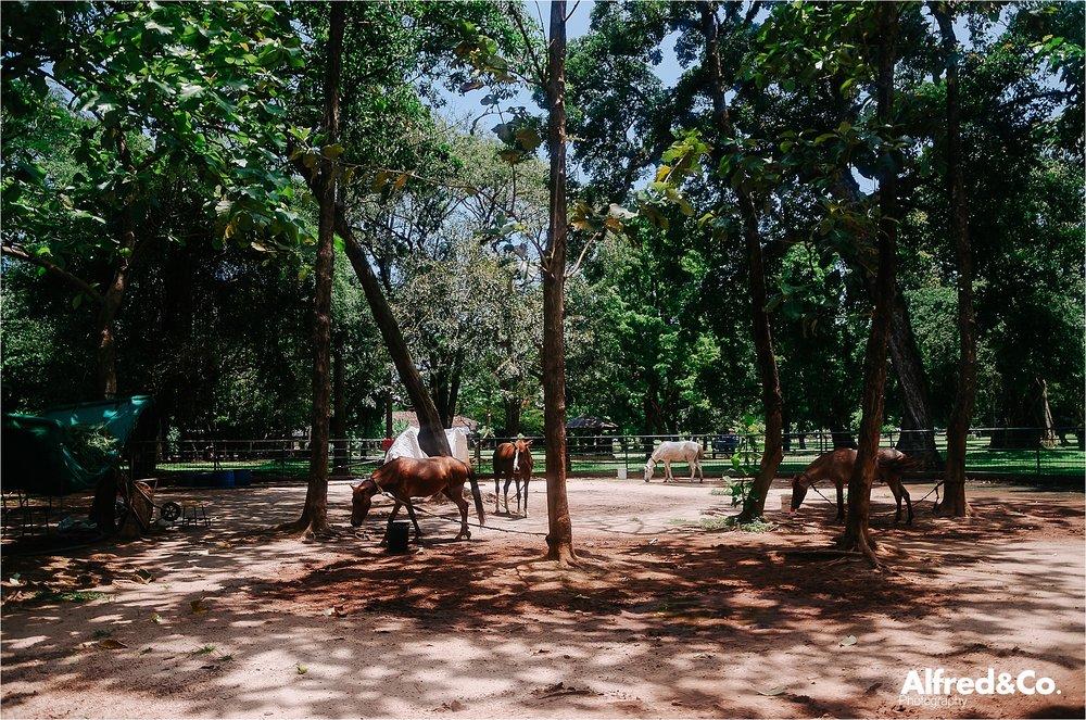 Sri Lanka 31.jpg