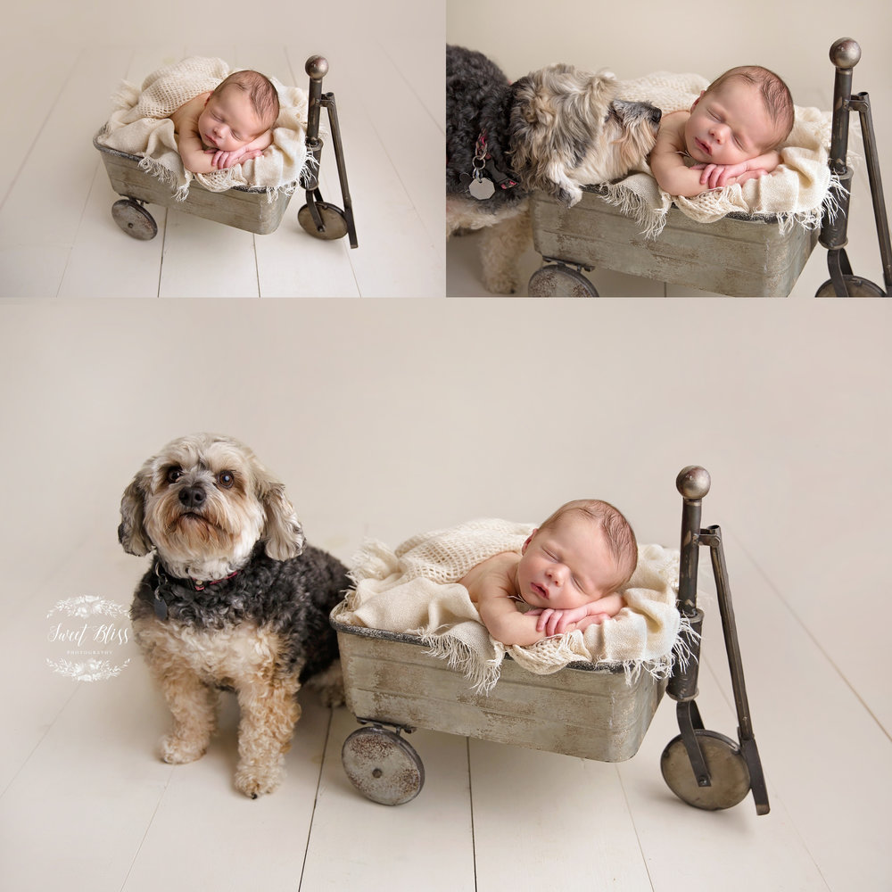 Baltimorenewbornphotographer_harfordcountynewborn_wagon1.jpg