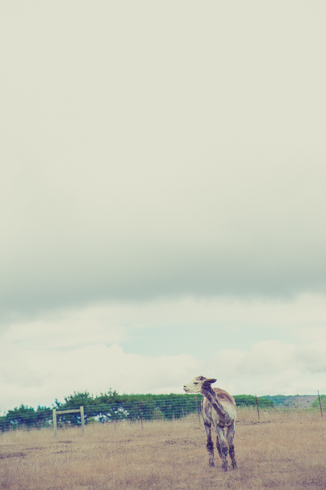 Styled Shoot Ashley Paige Photography-86.jpg