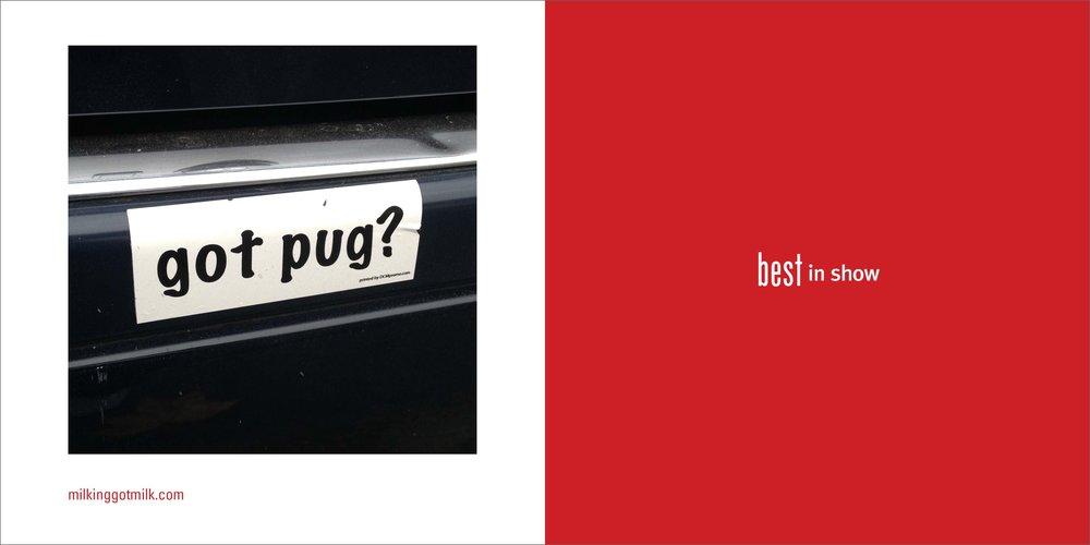 dog spread 1.jpg