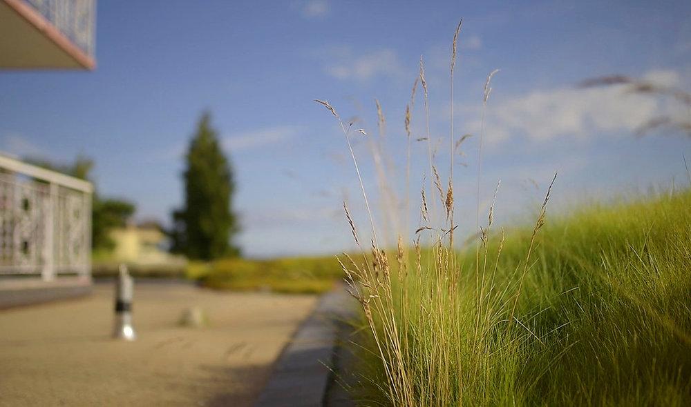 BRS-Villa-Maris-Green-Roof-Enns-Gauthier-Landscape-Architecture-Vancouver-Landscape-Architectural-Photography-Brett-Ryan-Studios-Rooftop-Grasses-002
