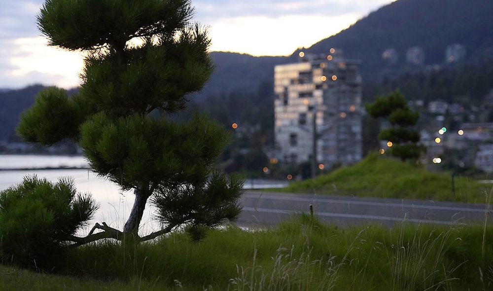 BRS-Villa-Maris-Green-Roof-Enns-Gauthier-Landscape-Architecture-Vancouver-Landscape-Architectural-Photography-Brett-Ryan-Studios-Green-Roof-005