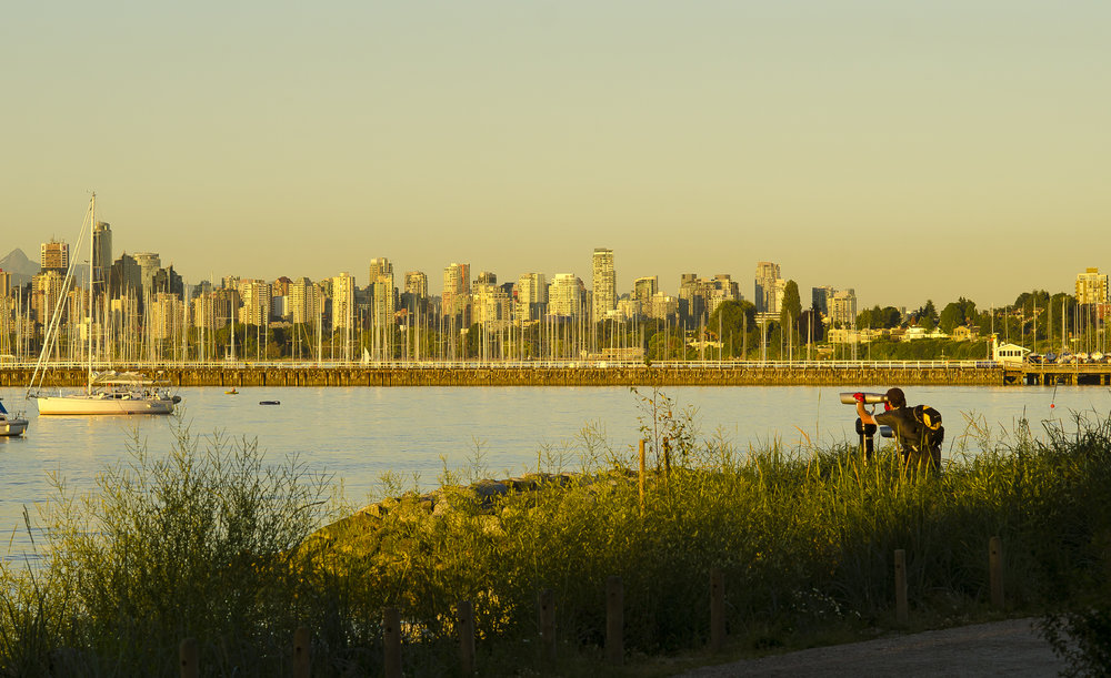 Jericho Beach Park improvements by Connect Landscape Architecture