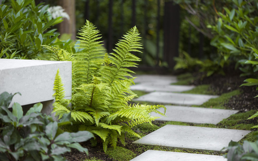 Ferns and pathway at Vancouver home and garden by Paul Sangha