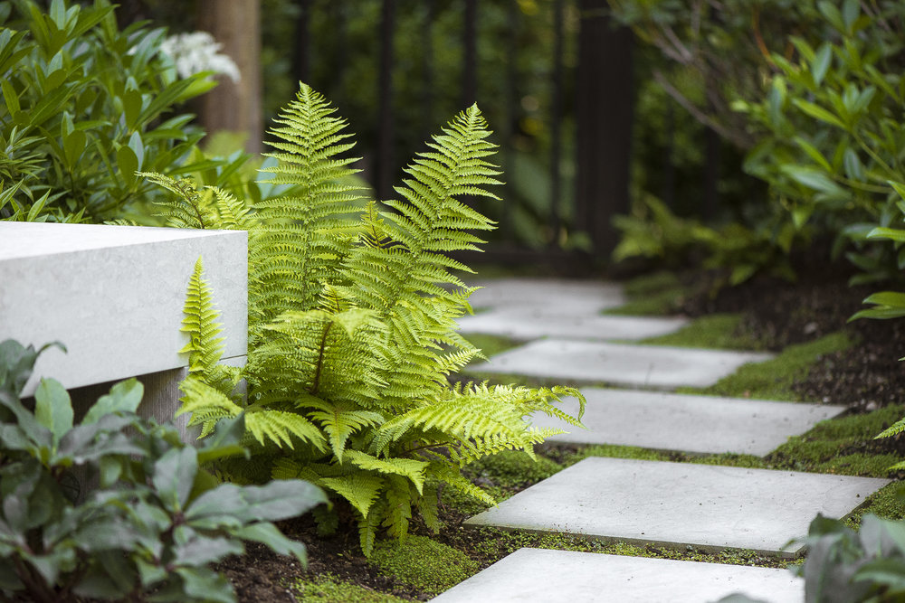 Vancouver-Residential-Landscape-Architecture-Design-Paul-Sangha-Poolside-Gardens-1005