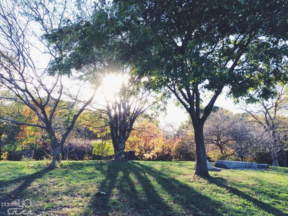 Arnold Arboretum in Jamaica Plains