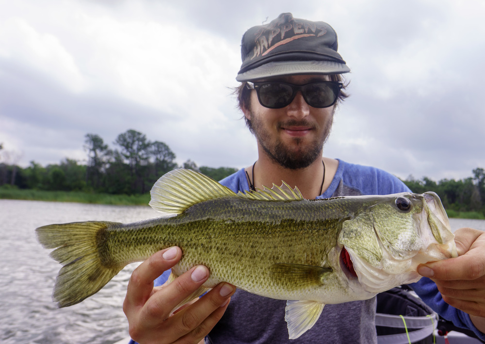 Bass on a Popper