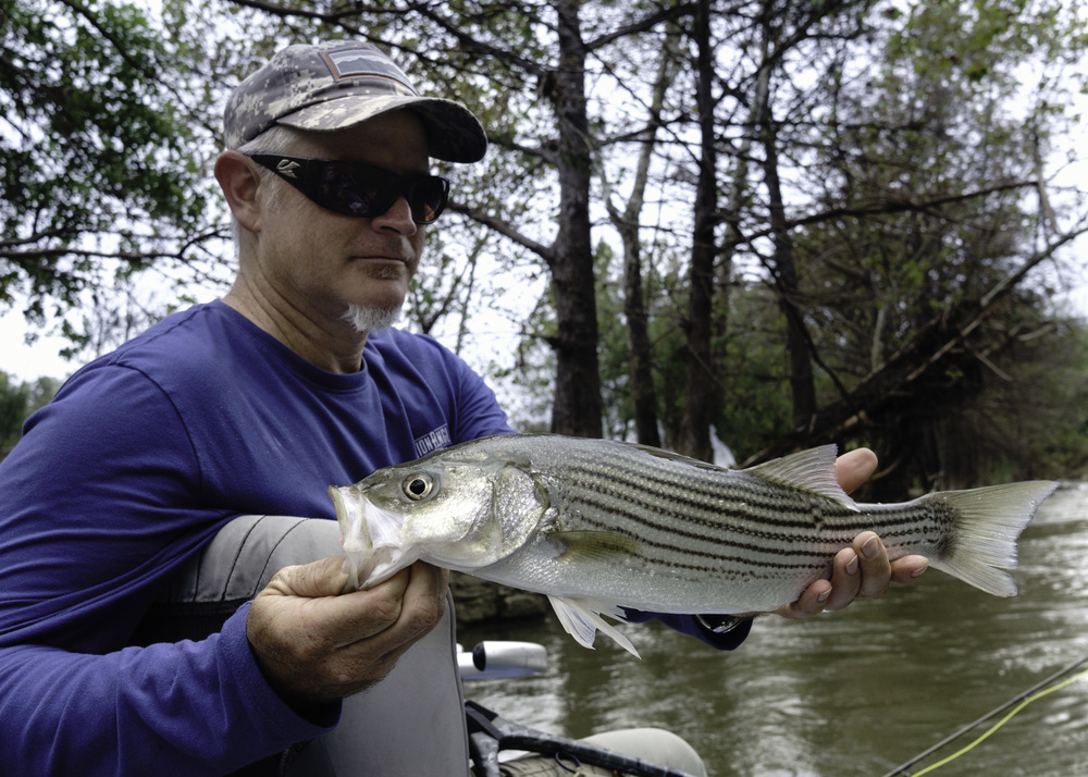 Guadalupe River Striped Bass