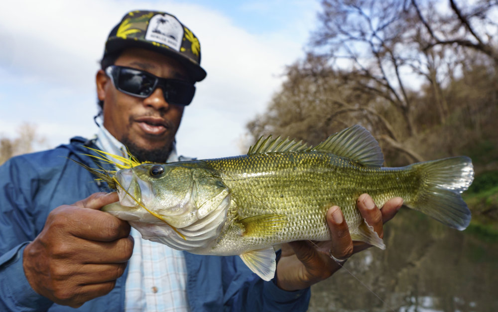 Colorado River Bass