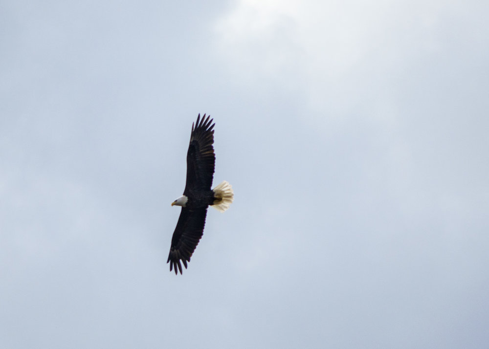 Eagle 1-11-18.jpg