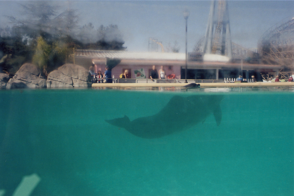 8_The Dolphin Exhibit.jpg