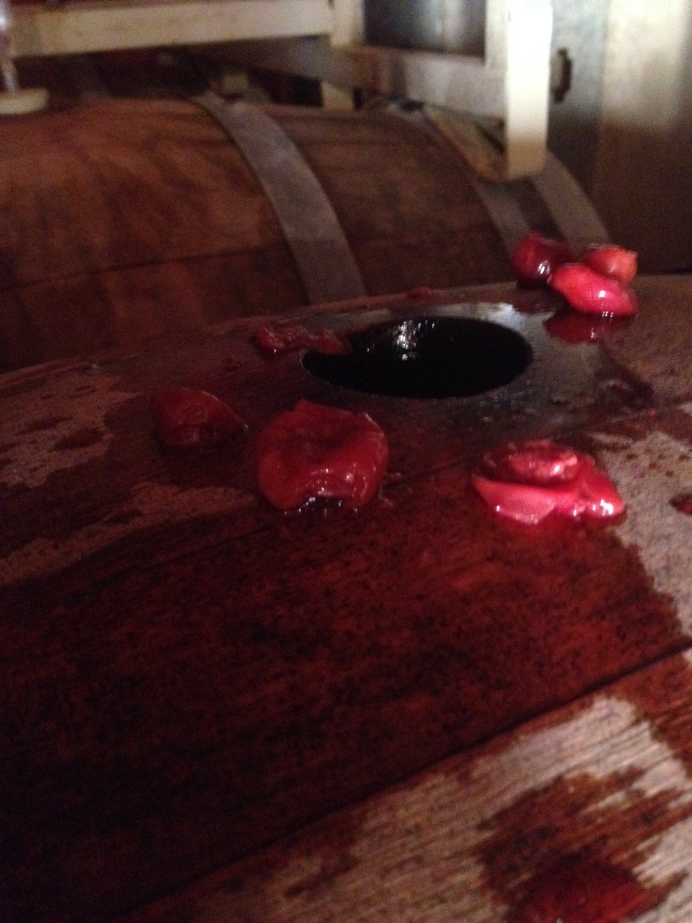 Adding a few Tart Cherries to the barrels before we put the beer in.