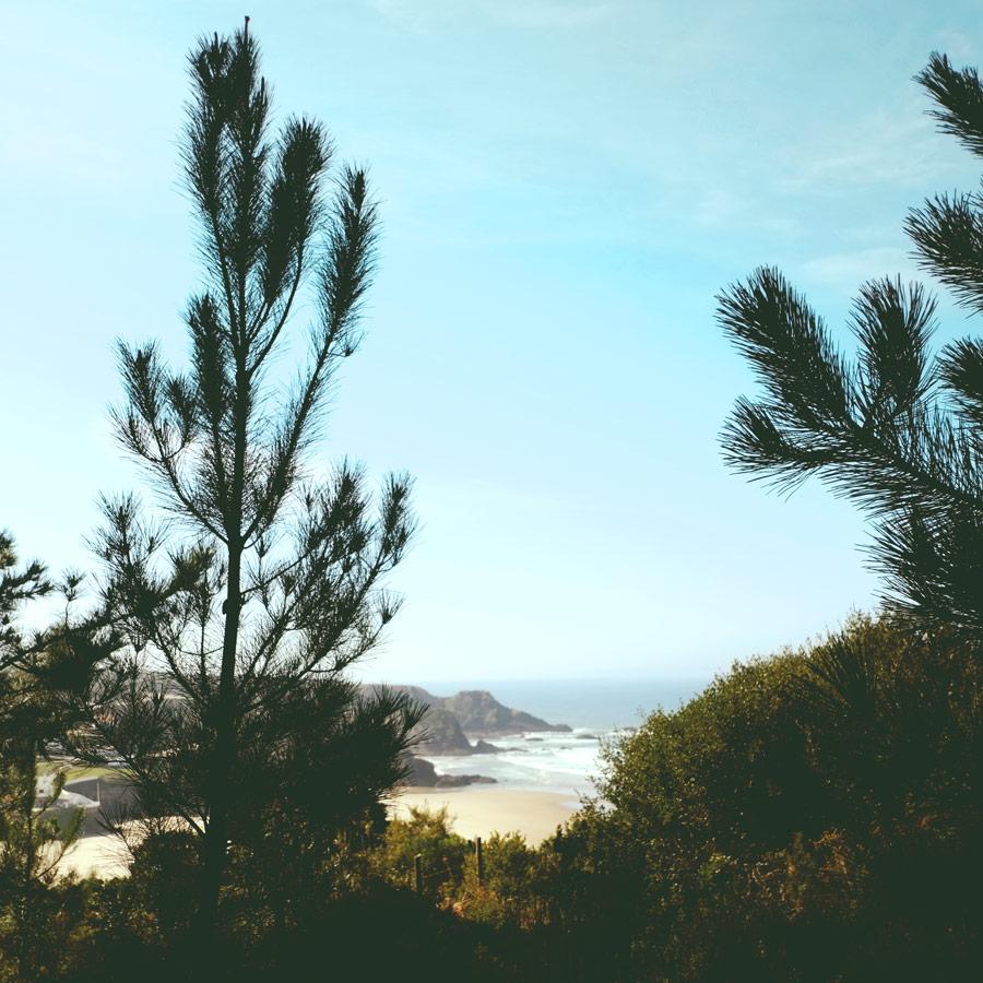 kiefern-panorama.jpg