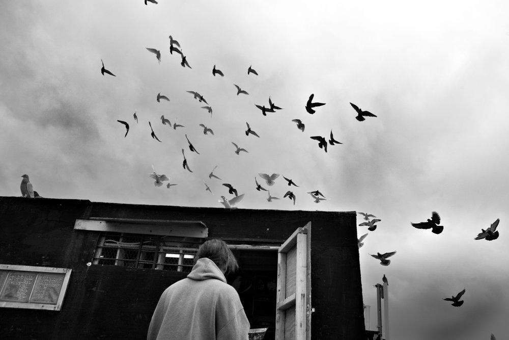 pigeon014.jpg