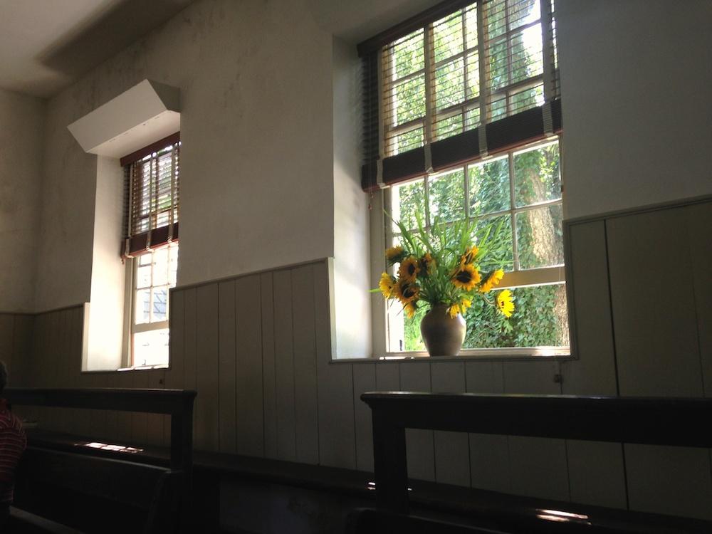 sunflowers@meeting