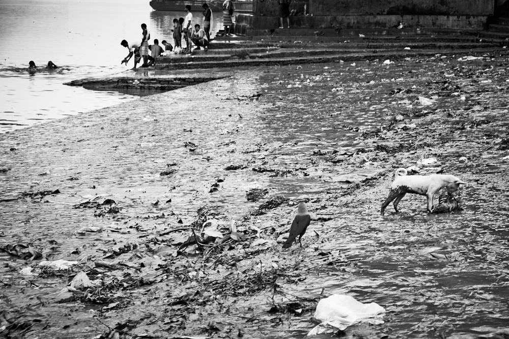 Detritus, Mallick Ghat, Kolkata.
