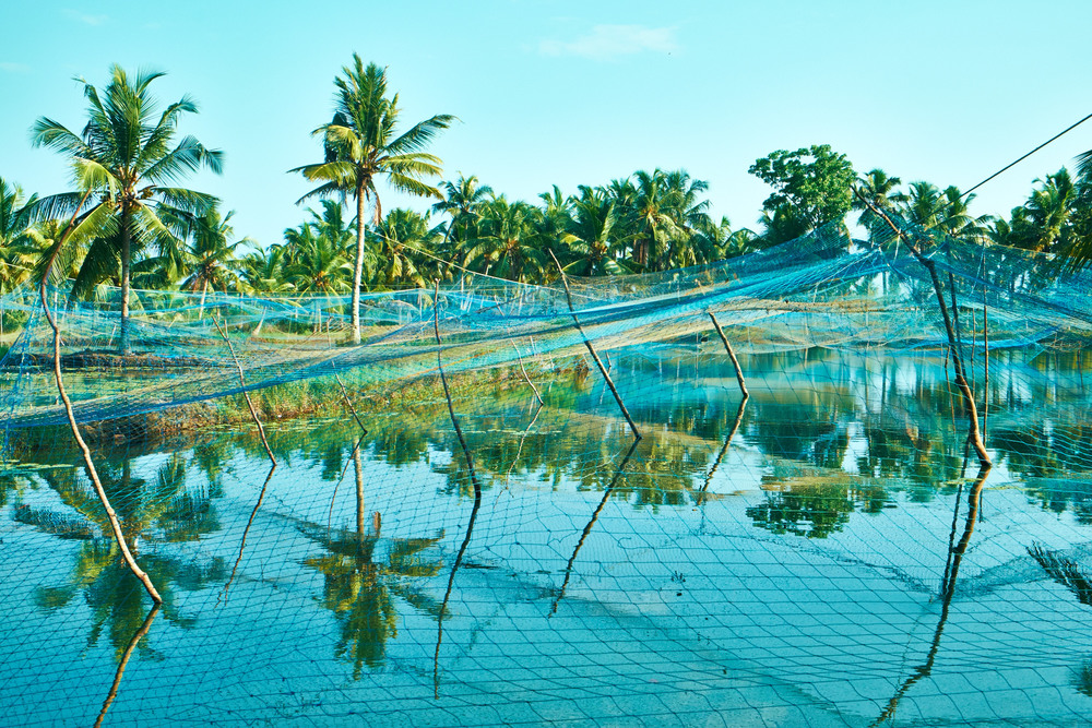 Prawn Farms, Munroe Island.