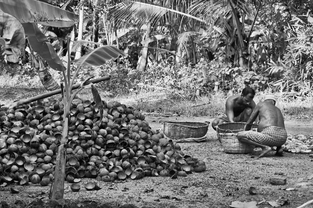 Coconut Huskers, Munroe Island.