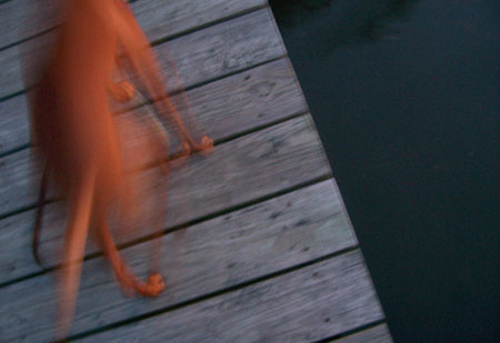 dawn%20dog%20gone.jpg