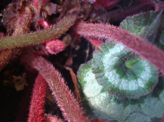 fuzzy stems