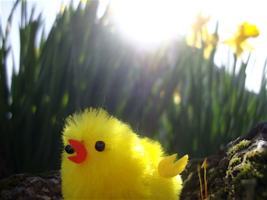 fuzzy-chick