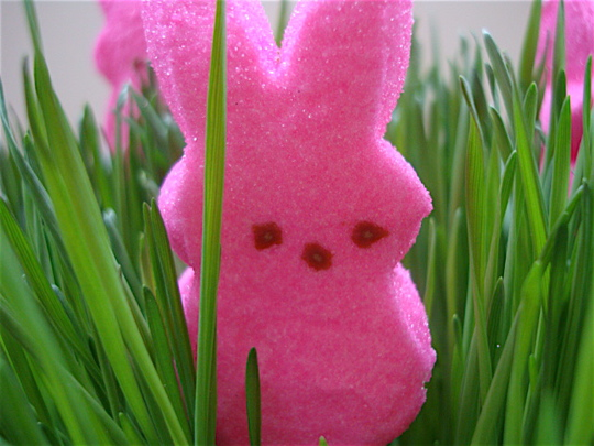 peeps-in-the-grass