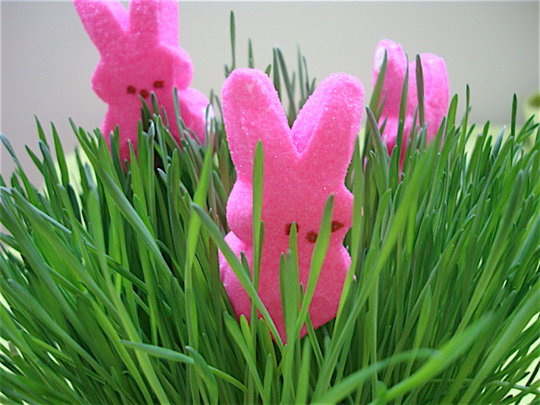 peeps-in-the-grass2