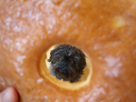 weezie-thru-a-donut-hole