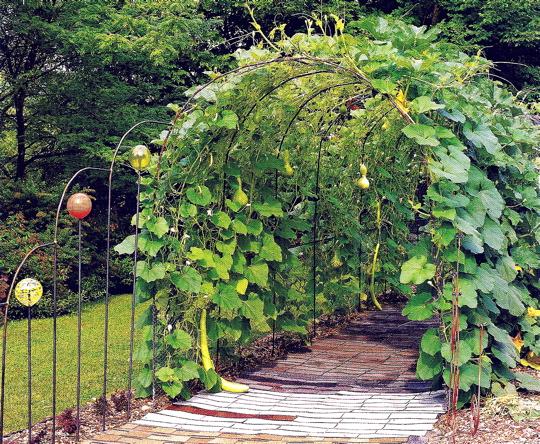gourdwalk