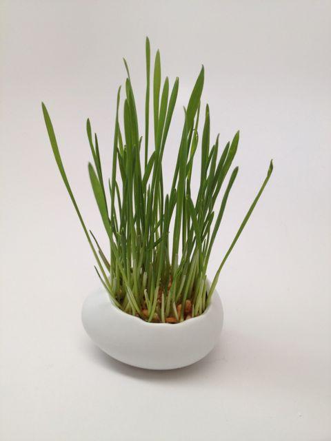 grass-6