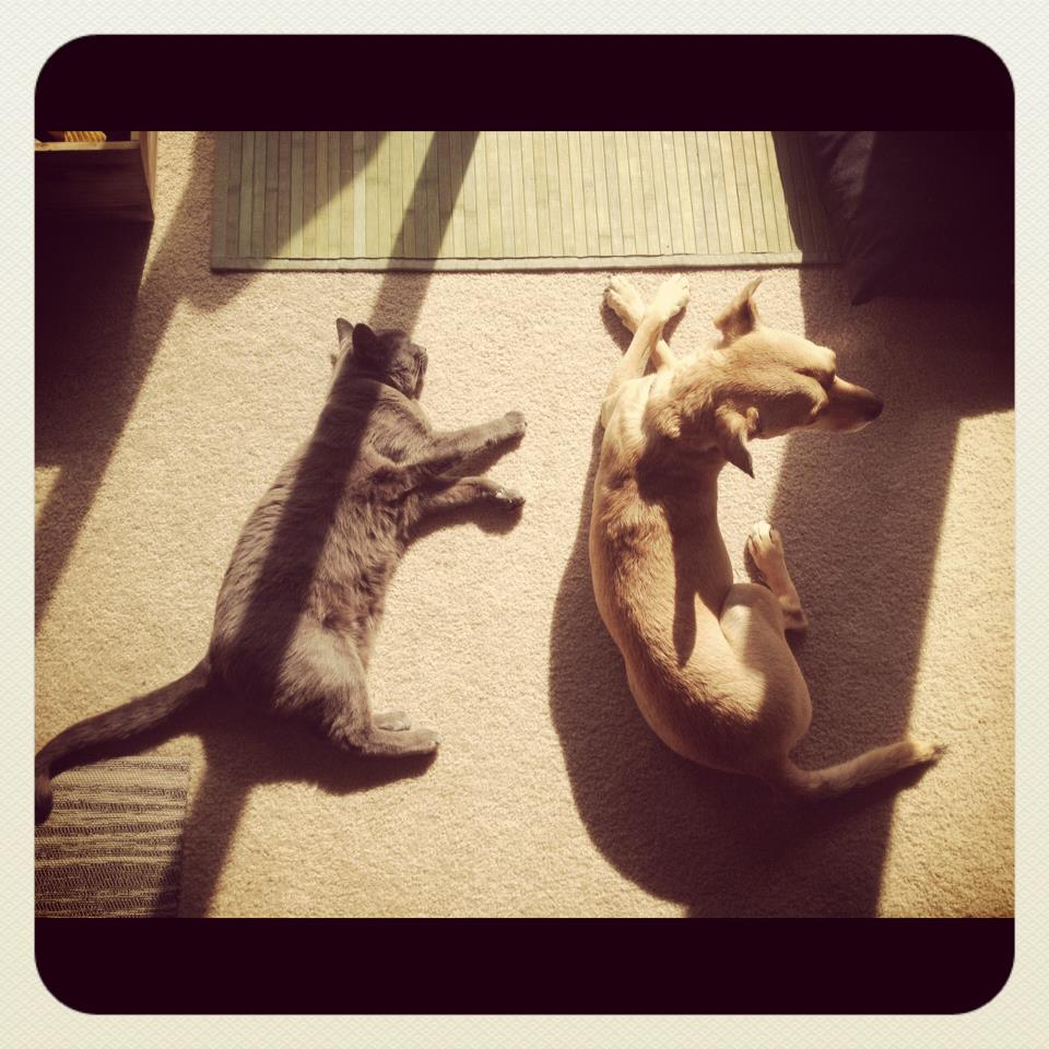 Sun is their favorite.