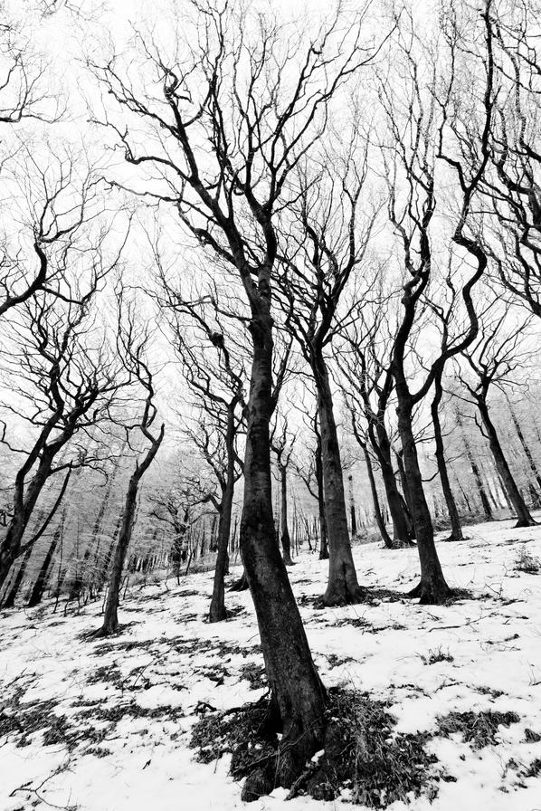 zeroing: Trees