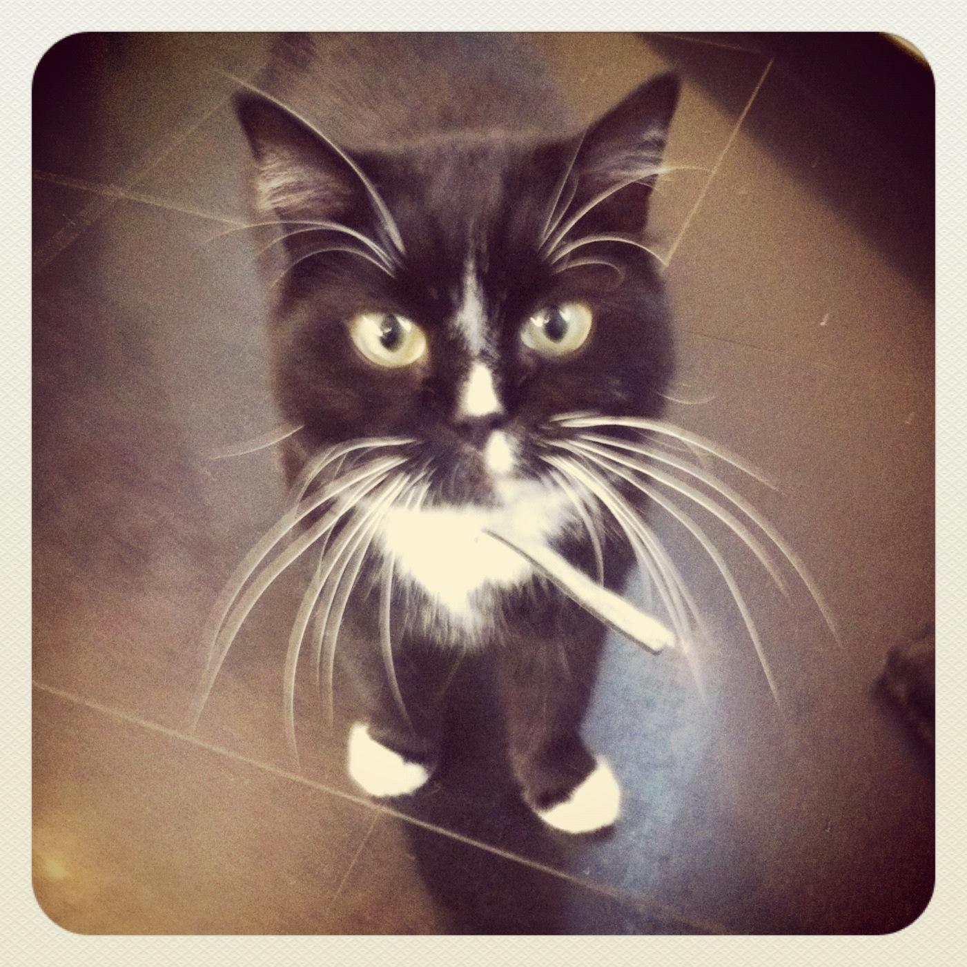 cuttest cat