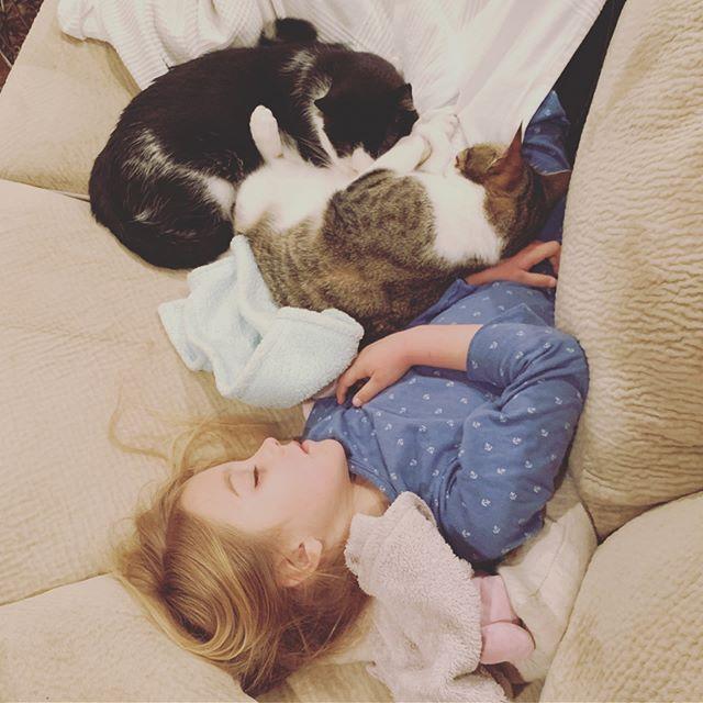 Kittens 🐈🐈🐈 #kittens #mydaughter #sleepingbeauty #mycats #momlife #cuddles #friends #bffs