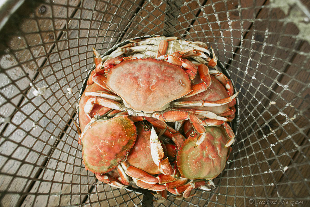 Dungeness crab, Kelley's Marina. Oregon Coast.