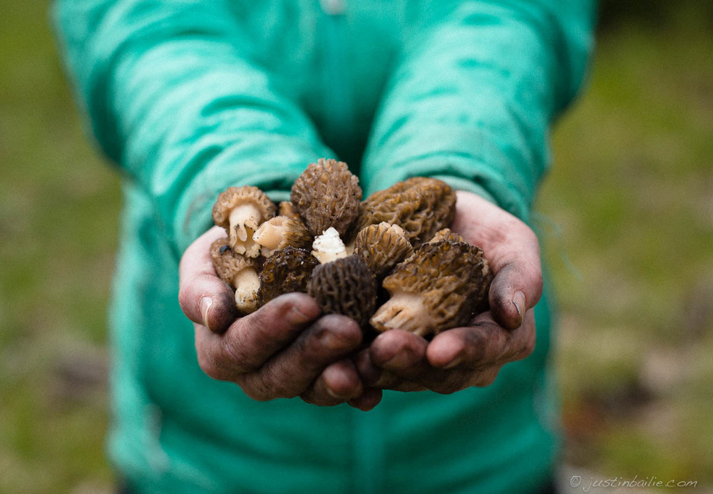 Morels found somewhere deep in eastern Oregon.