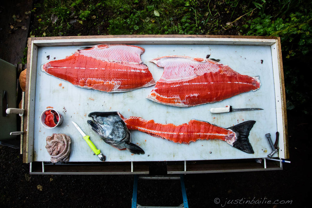 Still life of just cleaned, wild chinook salmon.