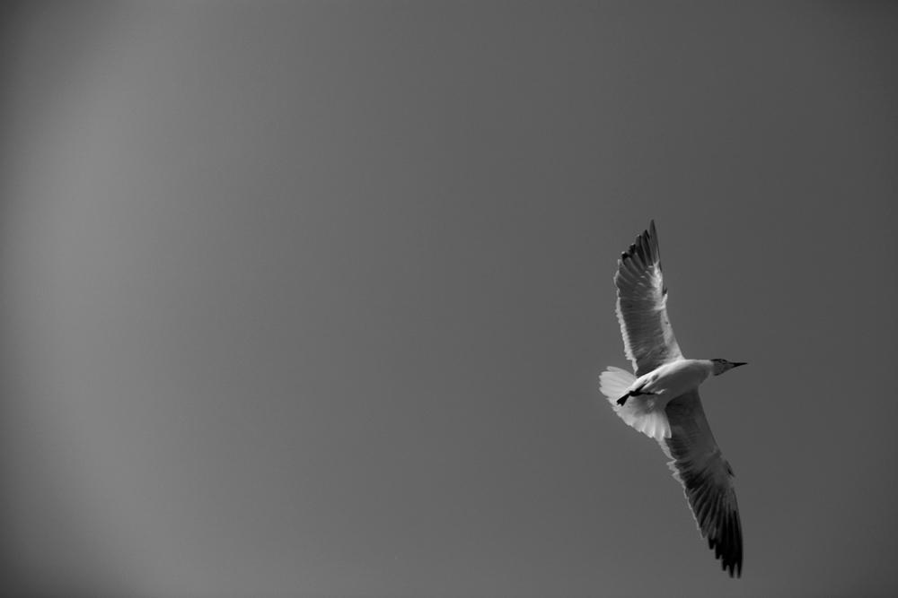 Dancing Seagull, 2011