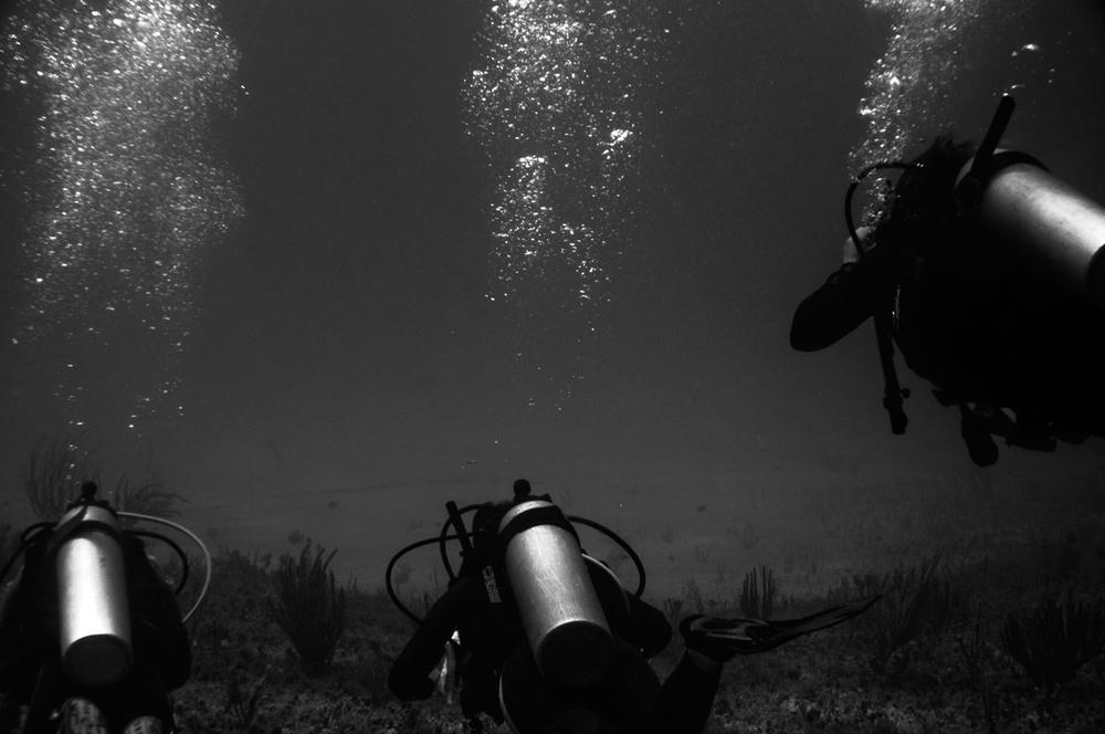 Three Dive, 2009