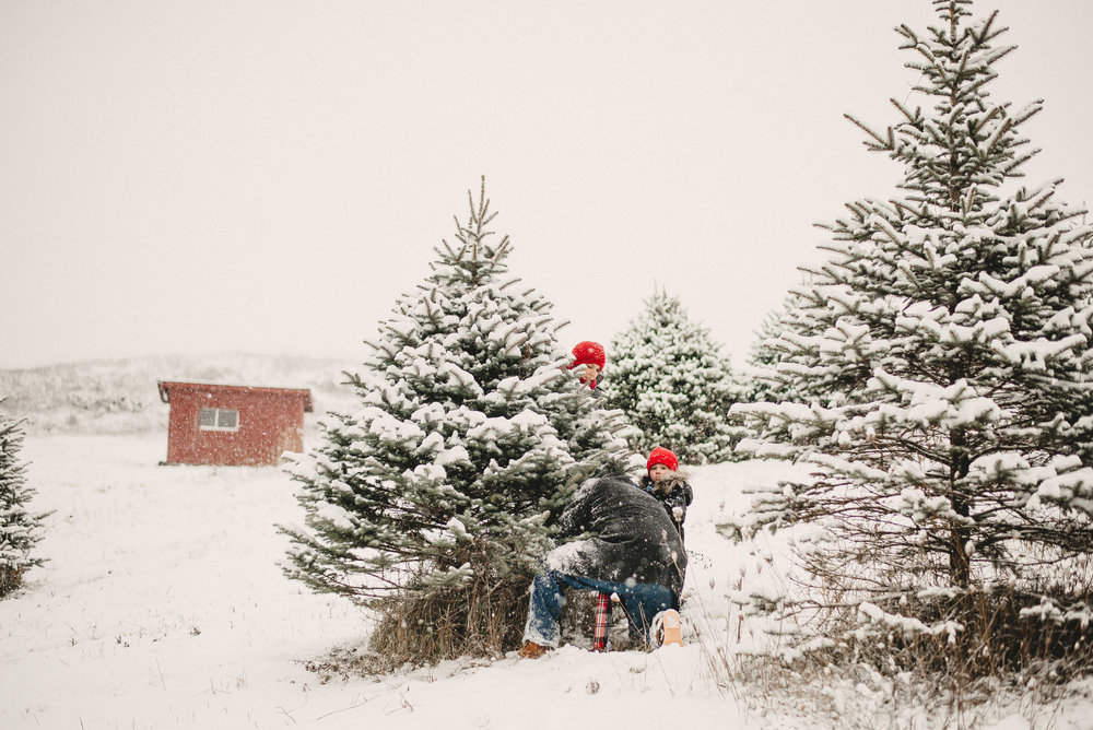 Christmas Tree Farm Family Photo Session Metamora Michigan Winter (10).JPG